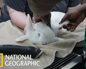 National Geographic Wild Vets